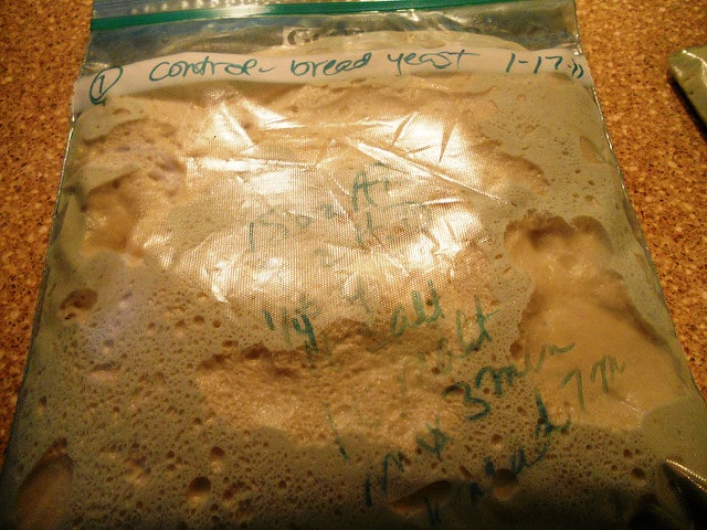 another bag of bread dough rising on a counter