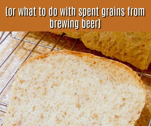 slice of spent grain bread text reads spent grain bread or what to do with spent grains after brewing beer
