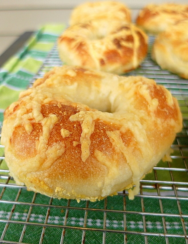 asiago cheese bagels cooling on a rack